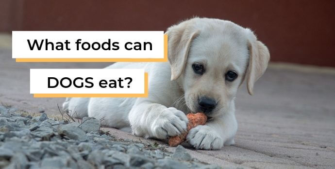 What foods can dogs eat?