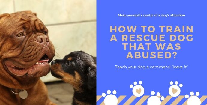 How to Train a Rescue Dog that was Abused?