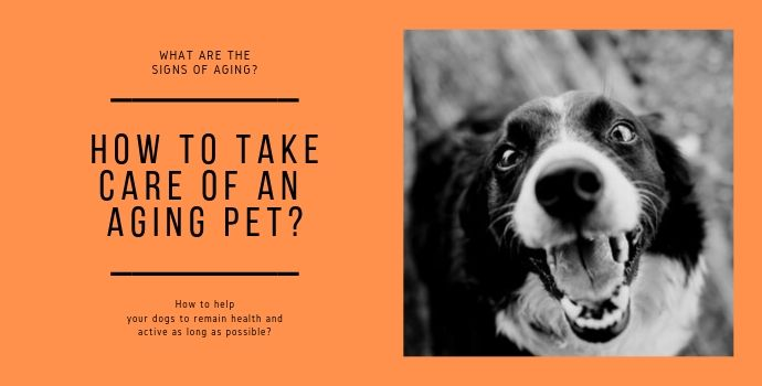 How to take care of an aging pet?