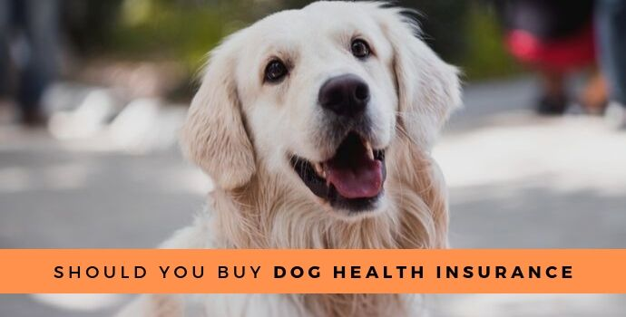 Should you buy dog health insurance?